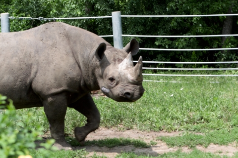 A Rhino from Great Plains Zoo in Sioux Falls, SD